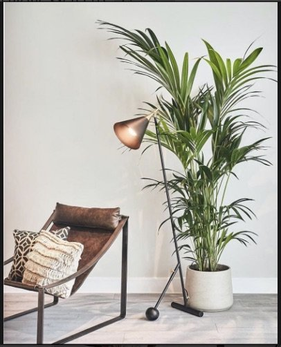 Louvre Collection with plant | Manor Interiors